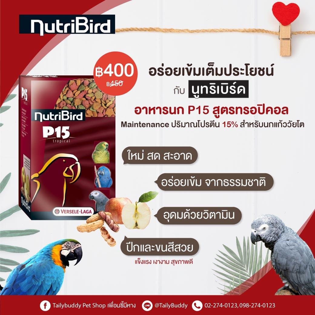 Bird - Biggest online pet supplies in Thailand